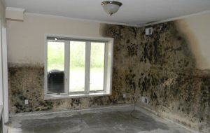 Mold Removal Doctor Miami
