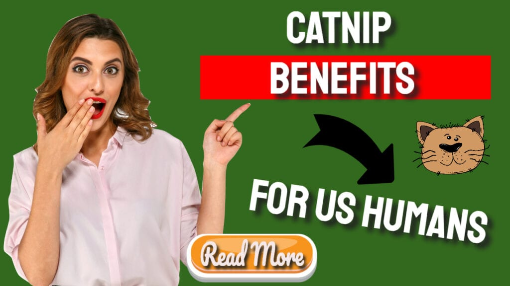 catnip benefits for us humans read more
