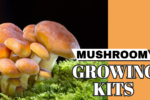Mushroom Growing Kits – Do They Work?