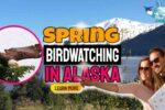 Spring Birdwatching in Alaska is Alaska's Best Birding Season!
