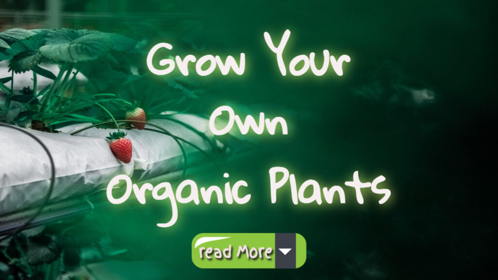 grow your own organic plants