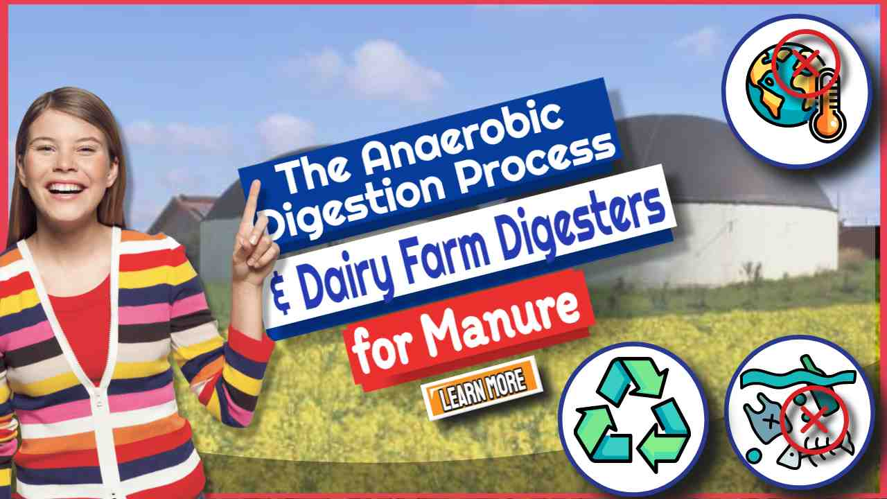 """Image text: """"The Anaerobic Digestion Process and Dairy Farm Digesters""""."""